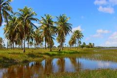 Vista del río debajo del cielo azul con los árboles de coco/natal escénicos, el Brasil Imagen de archivo