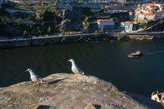 Vista del río del Duero de la altura del chalet rocoso Nova de Gaia, Oporto de la orilla Fotos de archivo