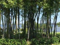 Vista del río en fuerte Myers, la Florida, los E.E.U.U. Foto de archivo libre de regalías