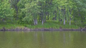 Vista del río o del lago almacen de video