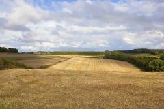 Vista del raccolto Fotografia Stock