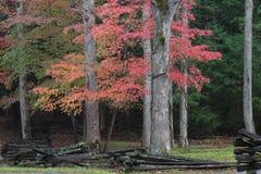Vista del recinto di ferrovia spaccata con i cornioli rossi e la foresta in autunno Fotografia Stock