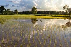 Vista del riflesso dell'azienda agricola e della nuvola del riso sull'acqua Fotografia Stock