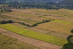 Vista del riso dell'azienda agricola alta in Tailandia Fotografie Stock