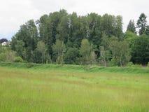Vista del santuario di fauna selvatica nazionale di Ridgefield Fotografia Stock Libera da Diritti