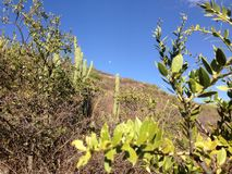 Vista del selvaggio a Cerro San Pedro Fotografia Stock