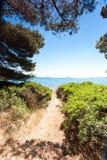 Vista del sentiero per pedoni dall'abetaia al mare adriatico Fotografia Stock Libera da Diritti