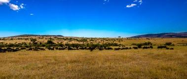Vista del Serengeti Fotografia Stock