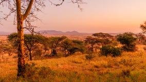 Vista del Serengeti Immagini Stock Libere da Diritti