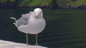 Vista del soggiorno bianco del gabbiano sulla nave in montagne con il giorno di estate verde della foresta Uccello di mare vento stock footage