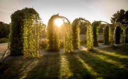 Vista del sol que brilla a través de arcos florales en el parque Imagen de archivo