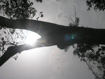 vista del sole Fotografia Stock