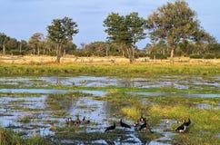 Vista del sud del fiume di luangwa Immagini Stock
