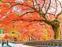 Vista del templo japonés en otoño en Kyoto, Japón imágenes de archivo libres de regalías