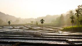 Vista del terreno agricolo nella mattina nebbiosa fotografia stock libera da diritti