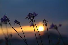 Vista del tramonto dai fiori Immagine Stock