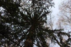 Vista del tronco de árbol abajo para arriba Imágenes de archivo libres de regalías