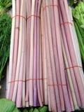 Vista del tronco fresco del loto Foto de archivo