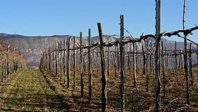 Vista del viñedo en invierno con la montaña en fondo almacen de metraje de vídeo