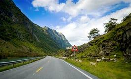 Vista del viaje del coche, Noruega. Foto de archivo