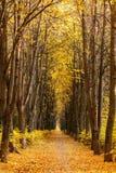 Vista del vicolo lungo vuoto di autunno immagine stock libera da diritti