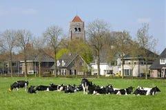 Vista del villaggio con le mucche in prato ed in case private Immagini Stock
