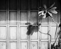 Vista delantera de la puerta de madera vieja y foto de la acción Imagen de archivo