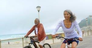 Vista delantera de los pares afroamericanos mayores activos que montan una bicicleta en la 'promenade' 4k almacen de metraje de vídeo