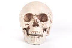 Vista delantera de un cráneo con la boca abierta aislada en backgrou negro Foto de archivo libre de regalías