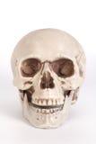 Vista delantera de un cráneo con la boca abierta aislada en backgrou negro Foto de archivo