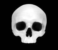 Vista delantera de un cráneo falso Imagen de archivo
