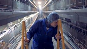 Vista delantera de un empleado de la casa de las aves de corral que mueve una escalera adelante y que observa pollos en jaulas metrajes