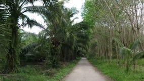 Vista delantera del camino a través de la cámara tropical pov de la acción del bosque almacen de video
