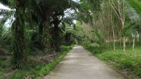 Vista delantera del camino a través de la cámara tropical pov de la acción del bosque metrajes