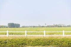 Vista delantera del campo agr?cola verde con la cerca y el cielo blancos fotos de archivo