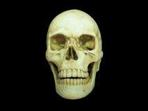 Vista delantera del cráneo humano en fondo negro aislado Foto de archivo libre de regalías