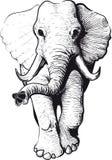 Vista delantera del elefante ilustración del vector