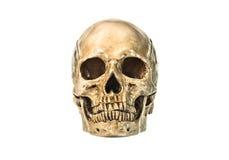 Vista delantera del skul humano Imágenes de archivo libres de regalías