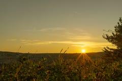 Vista dell'alba con la priorità alta della pianta verde e del fiore su me Fotografia Stock