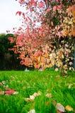 Vista dell'albero di autunno Immagine Stock Libera da Diritti