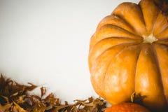 Vista dell'angolo alto della zucca arancio dalle foglie di autunno Fotografie Stock Libere da Diritti