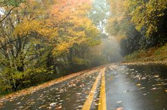 Vista dell'asfalto della mattina nebbiosa Immagine Stock