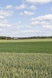 Vista dell'azienda agricola Fotografie Stock Libere da Diritti