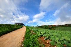 Vista dell'azienda agricola del cavolo a Phu Thup Boek, Tailandia Immagine Stock Libera da Diritti