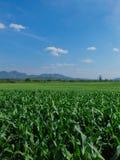Vista dell'azienda agricola del cereale Immagini Stock Libere da Diritti