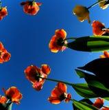vista dell'Errore di programma-occhio, fiori da sotto 4 Immagine Stock