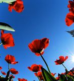 vista dell'Errore di programma-occhio, fiori da sotto 5 Immagine Stock