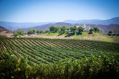 Vista dell'iarda del vino in Temecula, California immagini stock