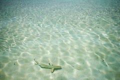 Vista dell'isola Maldive di vilamendhoo Immagini Stock