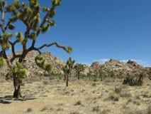 Vista dell'J-albero Immagine Stock